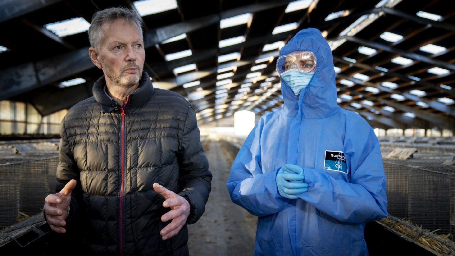 Китай се възползва от масовото избиване на норки в Дания