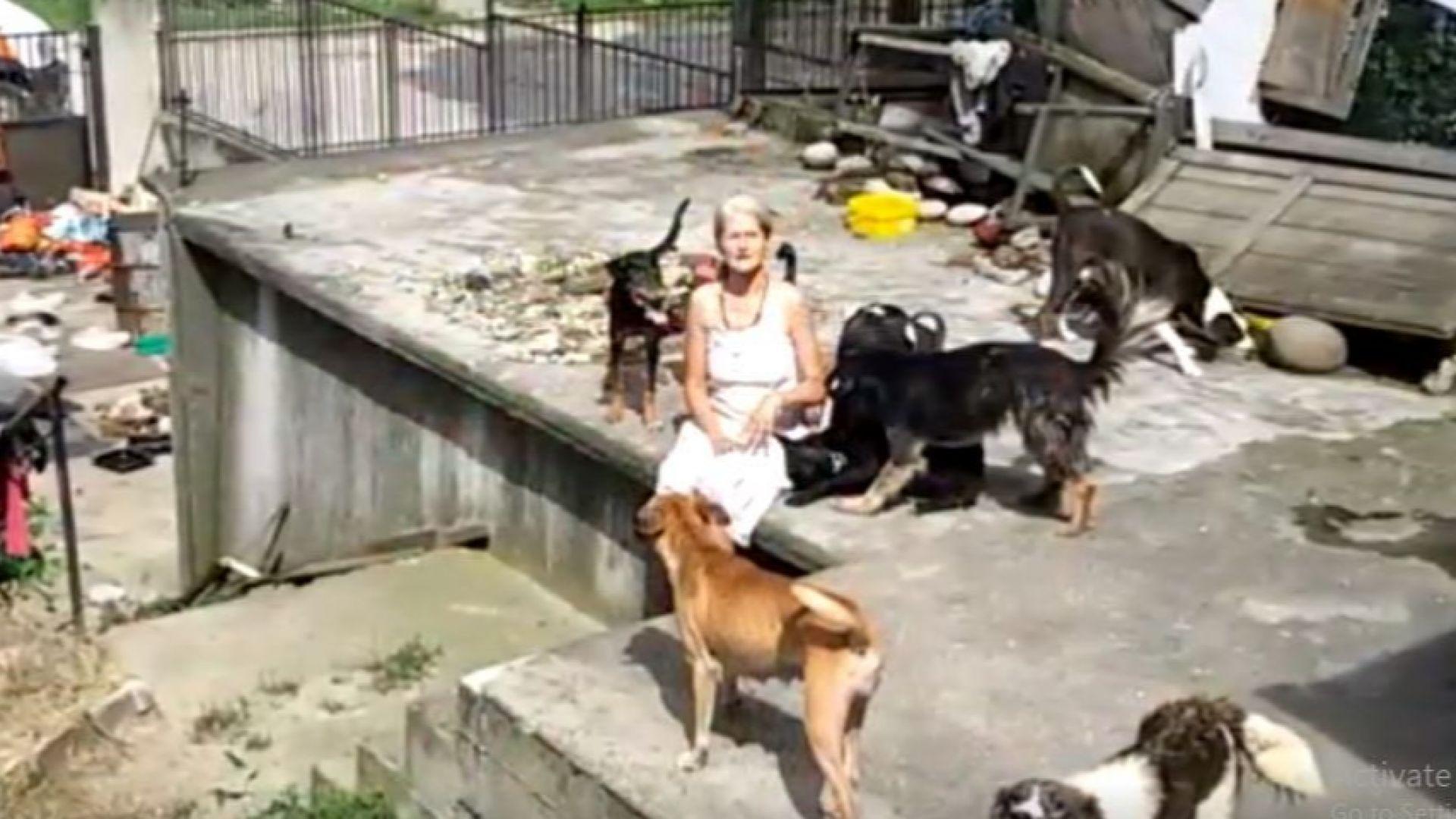 Глутница кучета нахапа бременна жена в Костенец
