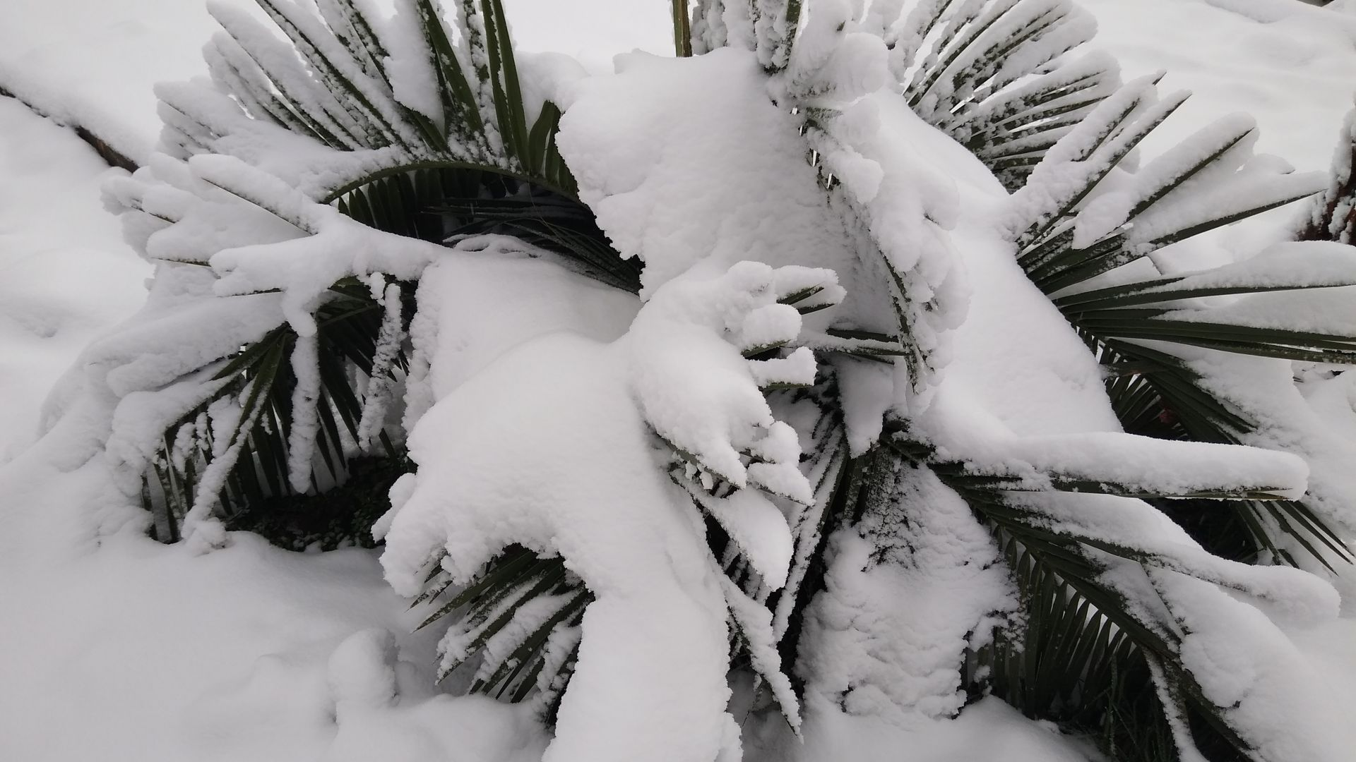 Поредна Коледа без сняг: става ли символът на зимата все по-рядко явление?