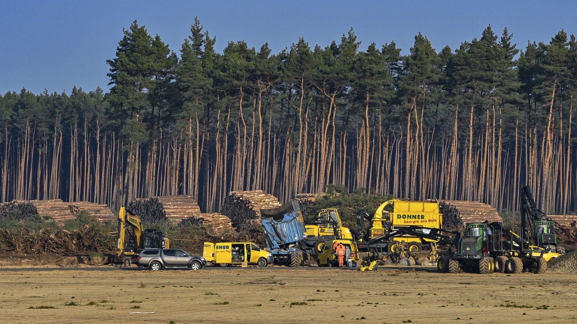 Поголовна сеч в гора спря за втори път строителството на гигазавода на Tesla край Берлин