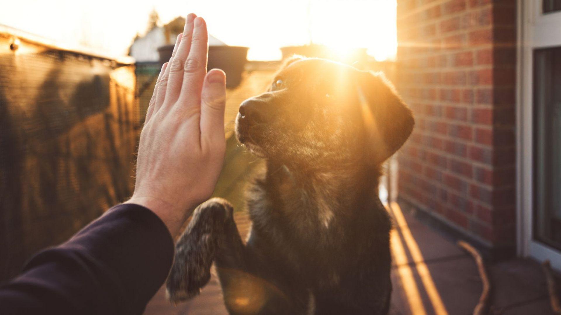 Кучетата трудно разграничават разлики в думите