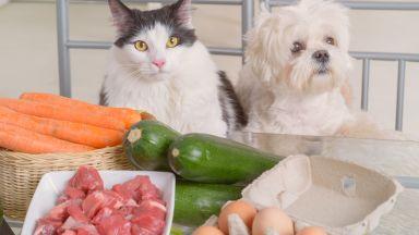 """Суровото месо и храната от масата - """"недоизпечената"""" сделка за здравето на вашия домашен любимец"""