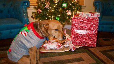 Домашни любимци, които мразят Коледа повече от всичко на света