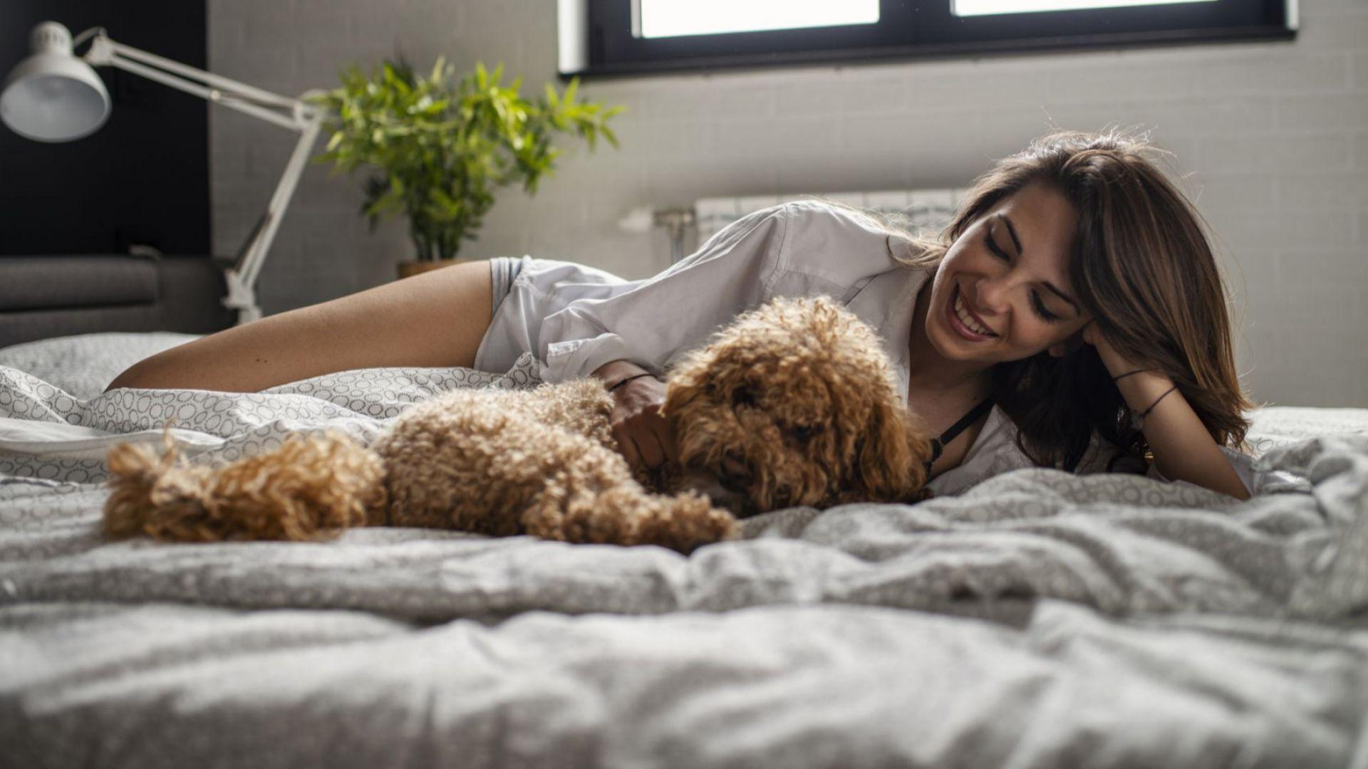 Допускането на кучетата до леглата ни е полезно за нашето здраве