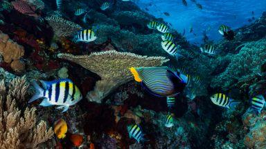 Рибите си отглеждат домашни любимци