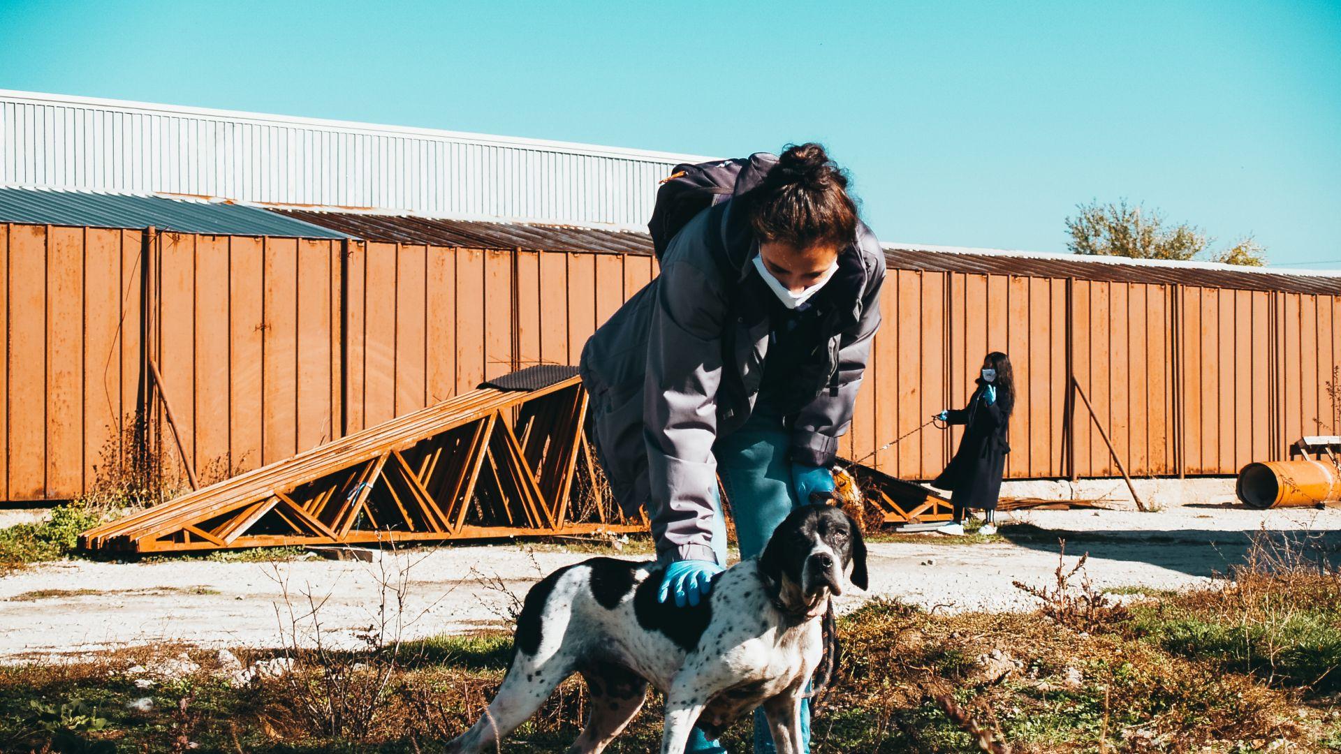 Доброволци от TELUS International в България помагат на кучета, настанени в приют