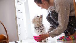 Тоалет, хранене, ритуали: Как вашето кученце да се превърне в пример за подражание