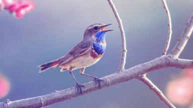 Птичите песни правят хората щастливи