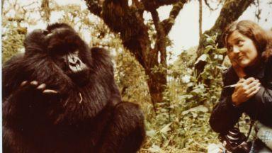 Студени досиета: Даян Фоси, която бе насечена с мачете заради своите горили в мъглата