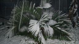 Глобално затопляне: ще отглеждаме ли палми и маслини в България (галерия)