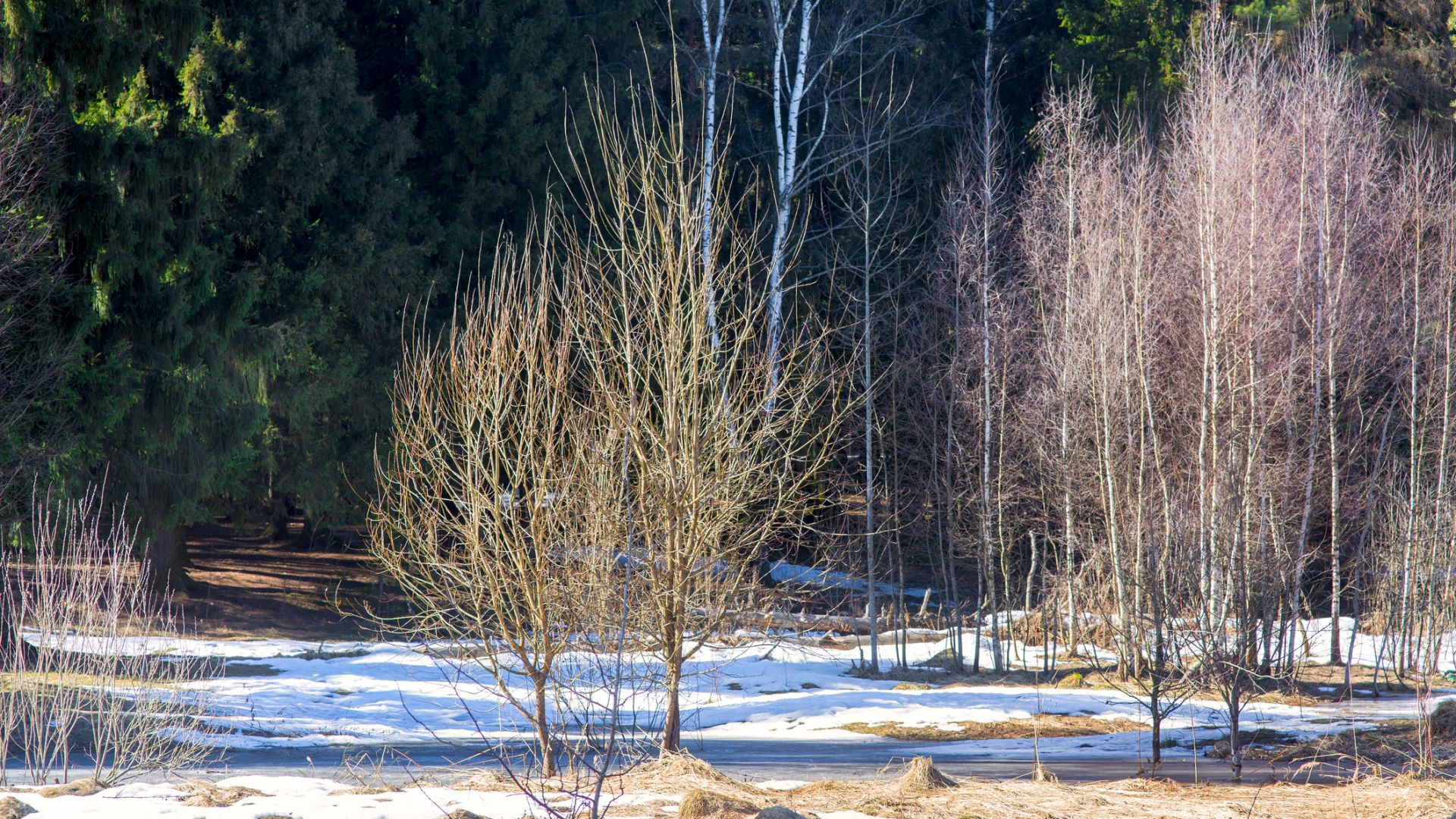 Пролетни температури от понеделник, остава почти без валежи