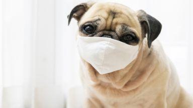 Рекордни продажби на маски за кучета в годината на пандемия