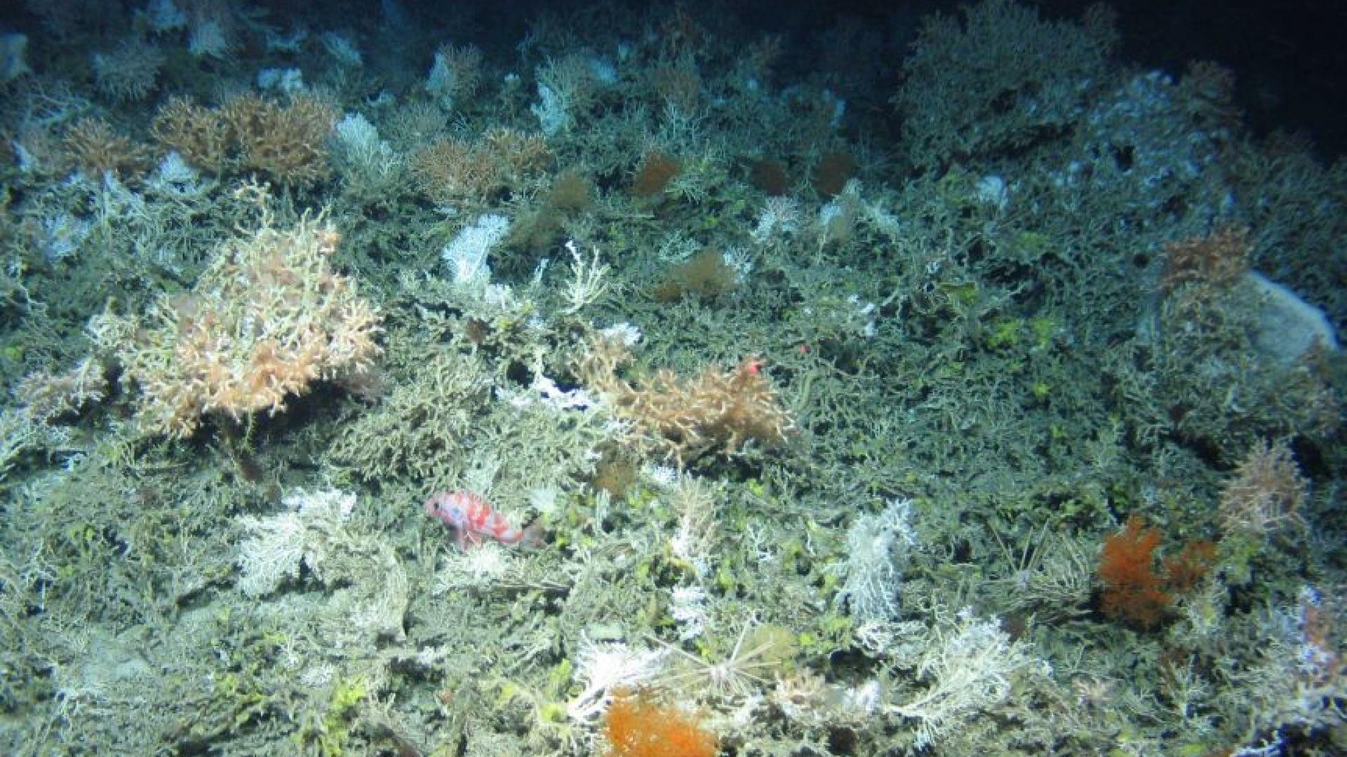 Проектът АТЛАС откри 12 непознати морски създания