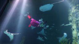 Водолази в ХанБок посрещнаха Нова година с рибите