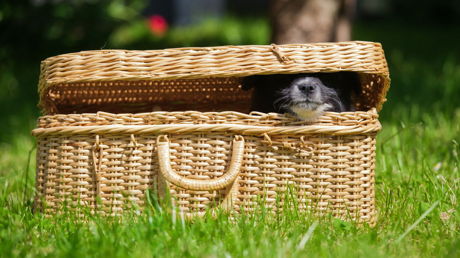 Тест: Можете ли да откриете скритите на снимките животни