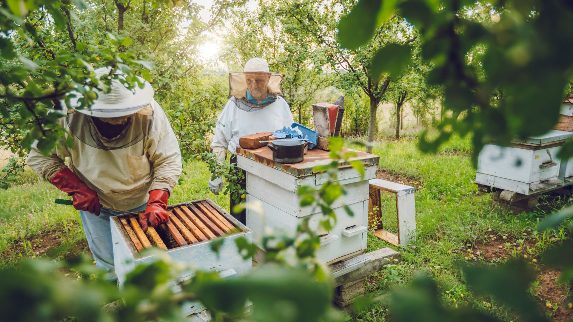 Отпускат 15,6 млн. лв. за иновации: дигитализира се пчеларството и храненето на бройлери