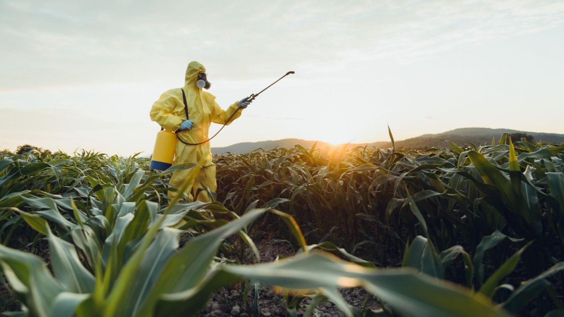 Мексико забранява генно модифицираната царевица и глифозата