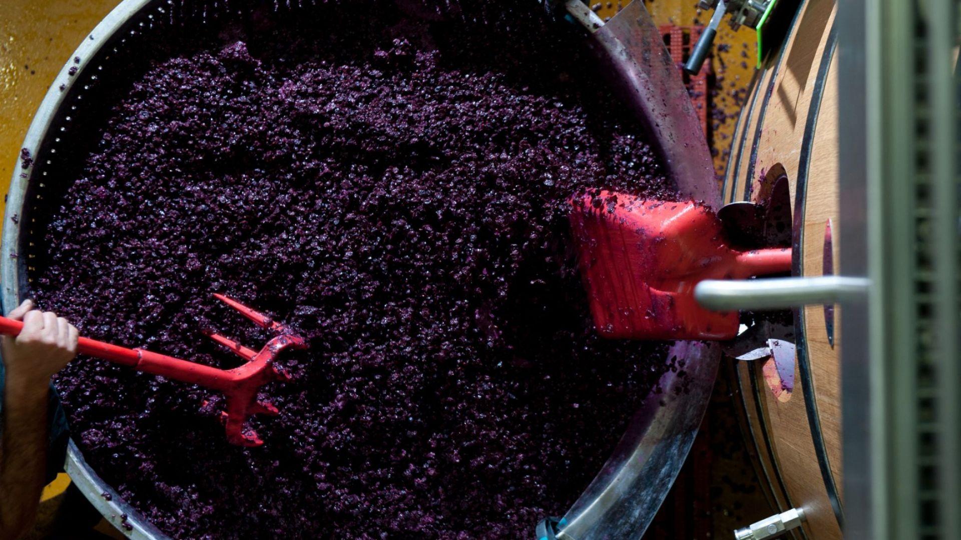 От утайката на вино в Гърция произвеждат хляб, пица и сладкиши