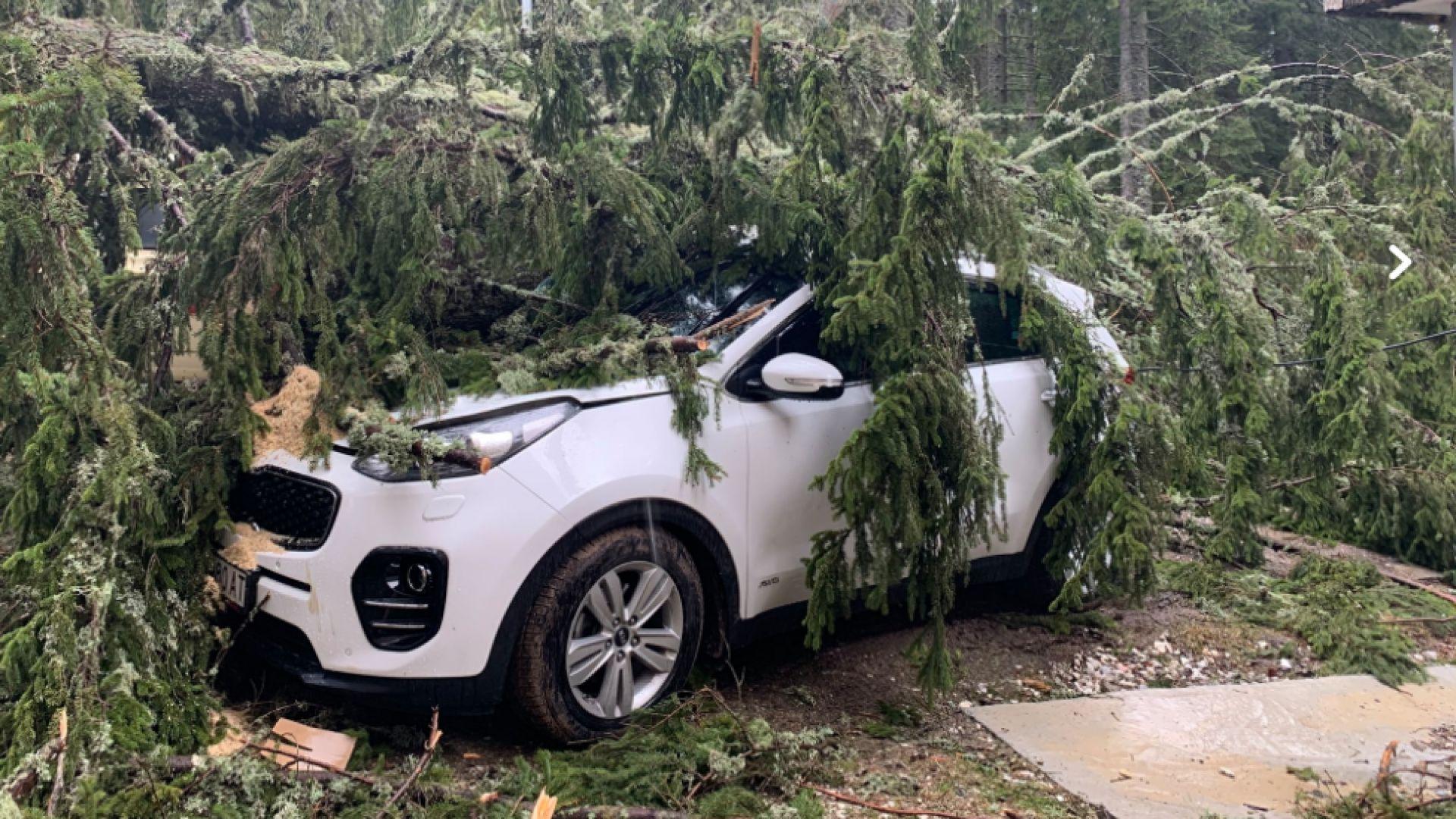 Дърво падна върху 5 коли в Пампорово, по чудо няма пострадали