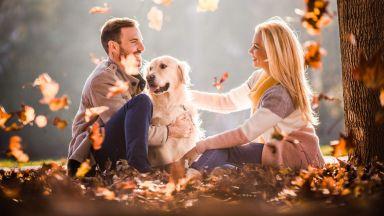 Стопаните на определени породи кучета са по-привлекателни за противоположния пол