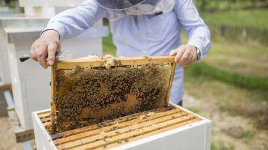 Да отпадне двойната регистрация на пчелините, решиха депутатите