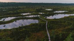 Естонска компания прави пари от гори и блата