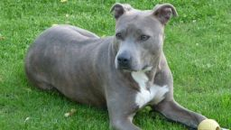 Арестуваха 24-годишен, ранил смъртоносно куче с нож