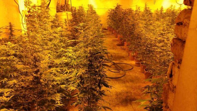 Внушителна по размери наркооранжерия е разкрита в Бойчиновци, съобщи БНТ.