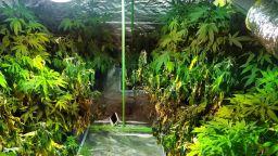 Хотел в Слънчев бряг превърнат в голяма наркооранжерия (снимки)