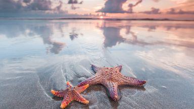 Учени откриха в Мароко най-древната морска звезда