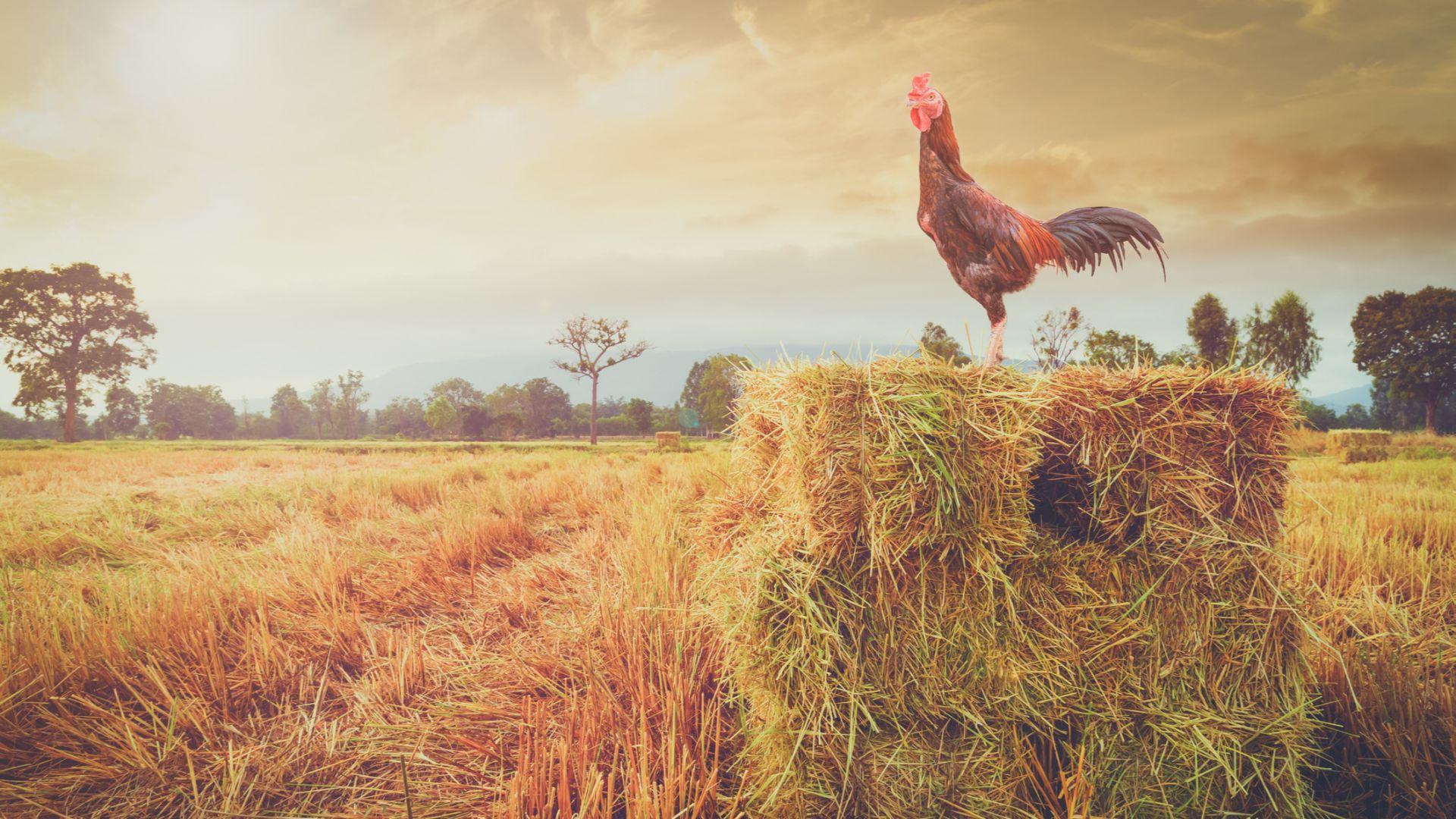 Франция защити селските шумове и миризми със закон