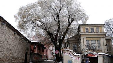Десетки сигнали за паднали клони в снежен Пловдив (снимки)