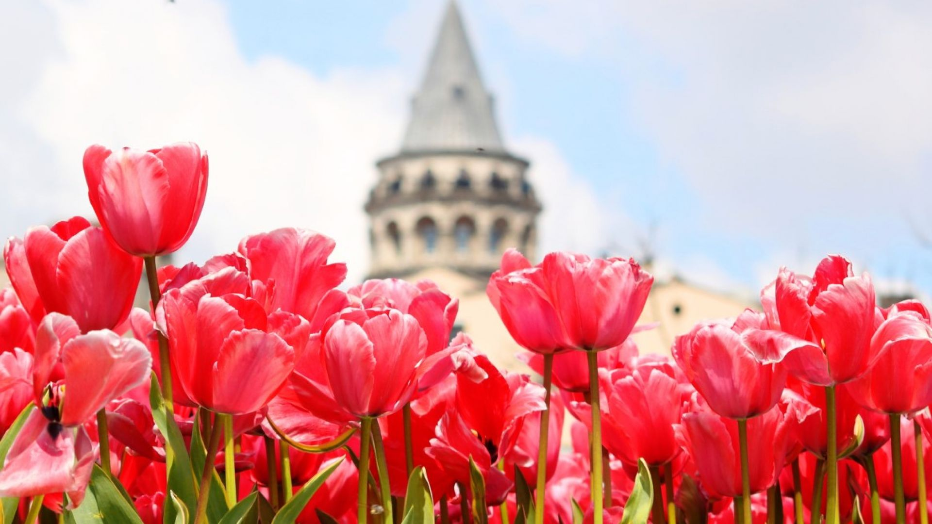 Истанбул е винаги добра идея. Най-големият и космополитен град в Турция се събужда за живот на открито през пролетта. Парковете се изпълват с хора, а лехите преливат от лалета, нарциси и зюмбюли във всички възможни цветове.