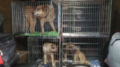 Мъж и жена отглеждат 200 кучета и 90 котки в незаконен приют