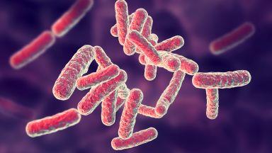 Биолози са открили почвени микроби, ускоряващи глобалното затопляне