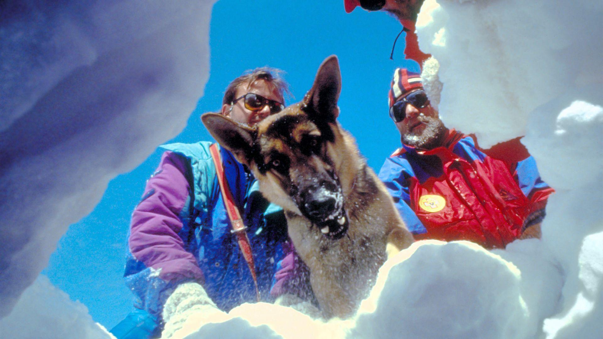При лавина в Алпите: Кучета спасиха затрупаните си стопани