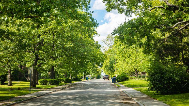 Колко ценно за градската среда е едно улично дърво?