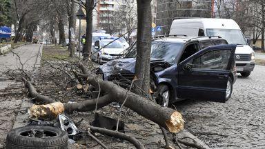 Шофьор помете с джип дървета на столичен булевард (снимки)