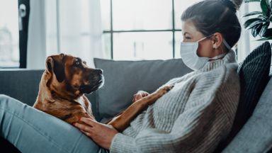 Една четвърт от новите стопани на кучета възнамеряват да ги изоставят