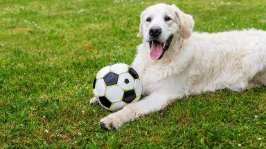 Кучетата се включват в игри, за да зарадват стопаните си