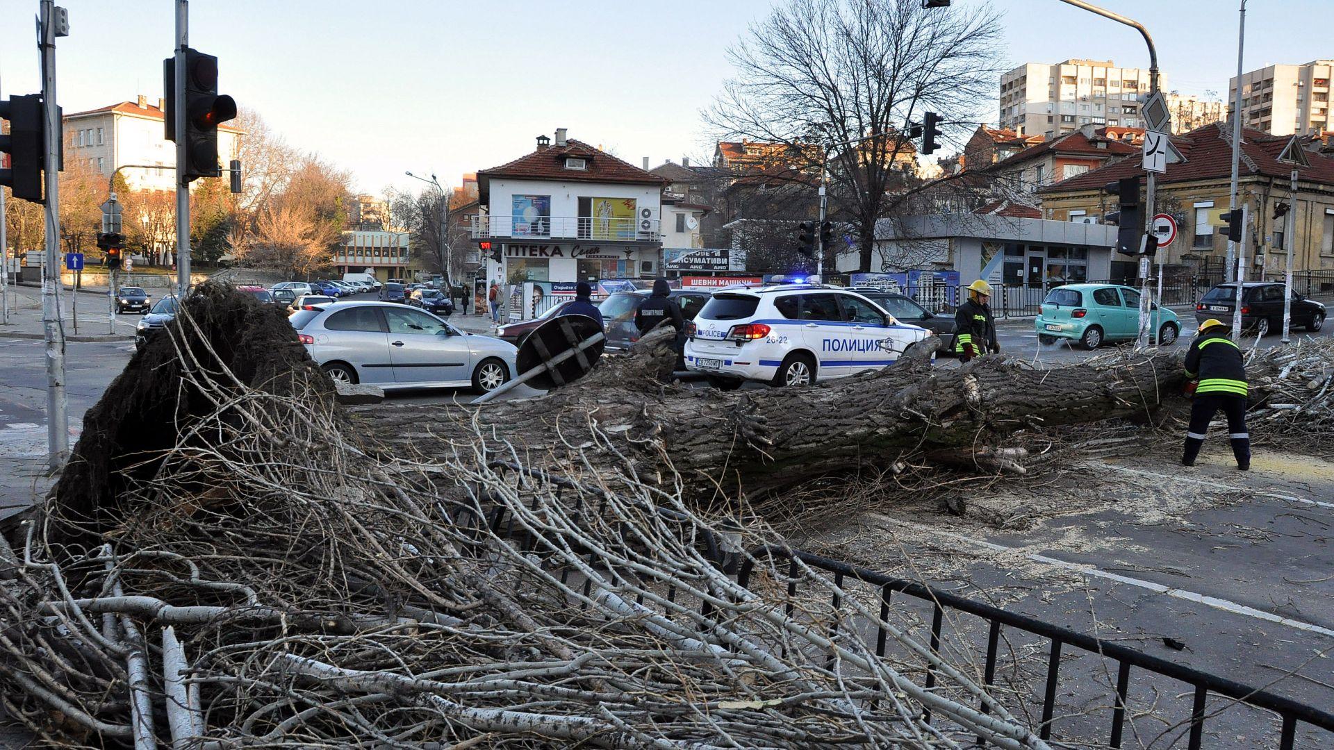 Буря отнесе покрив в училище, изкорени дървета, скъса тръбопроводи (видео)