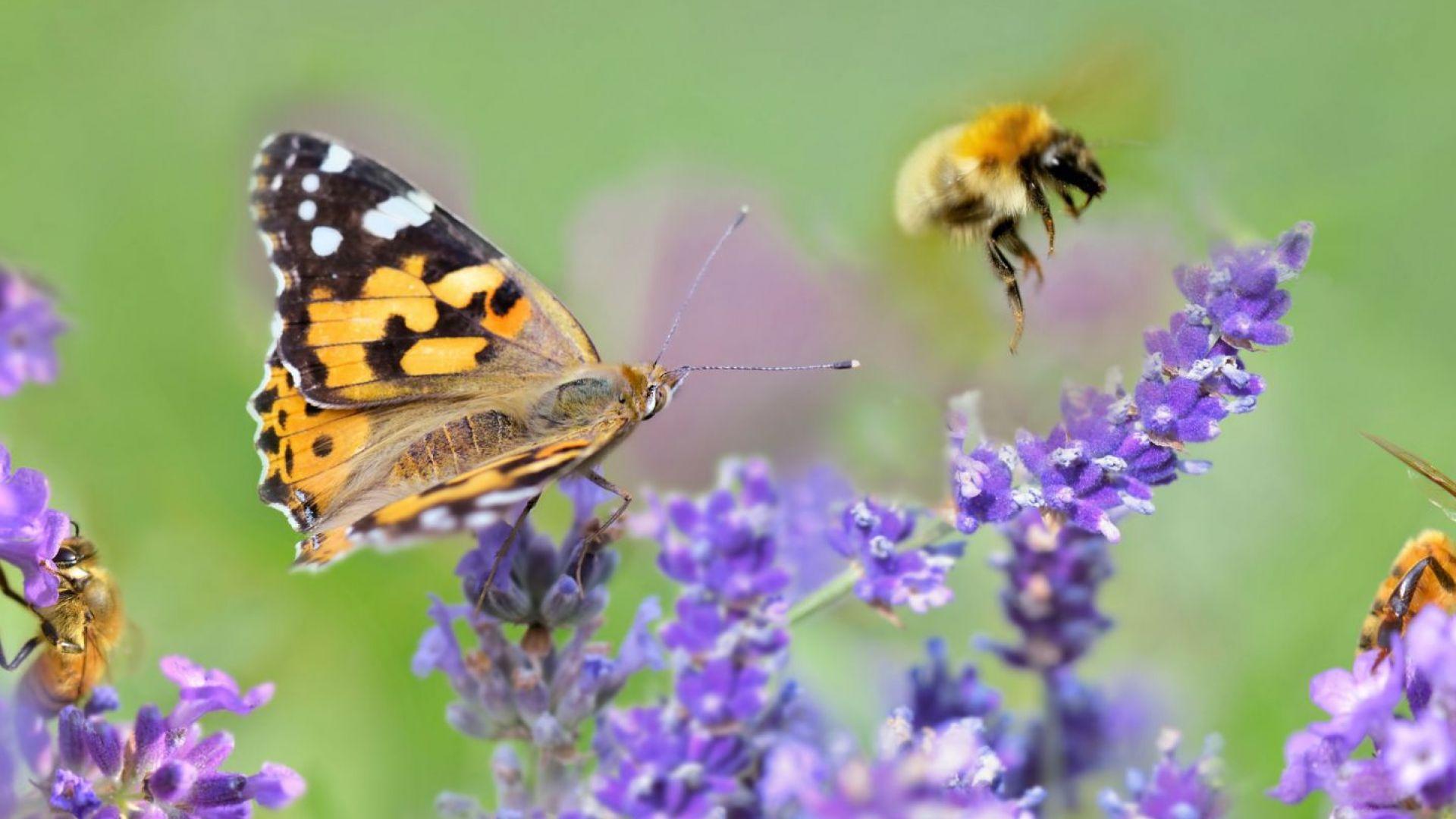 Намира ли място биоразнообразието в Плана за възстановяване?