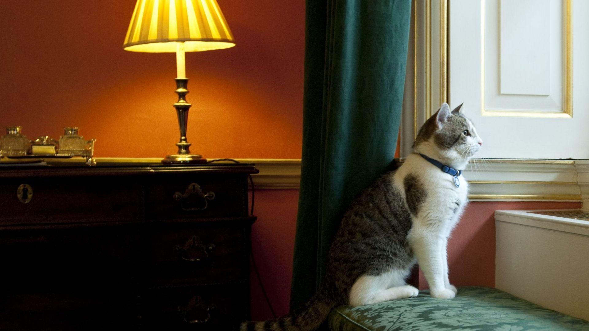 Котаракът Лари вече десет години е главен ловец на мишки във Великобритания