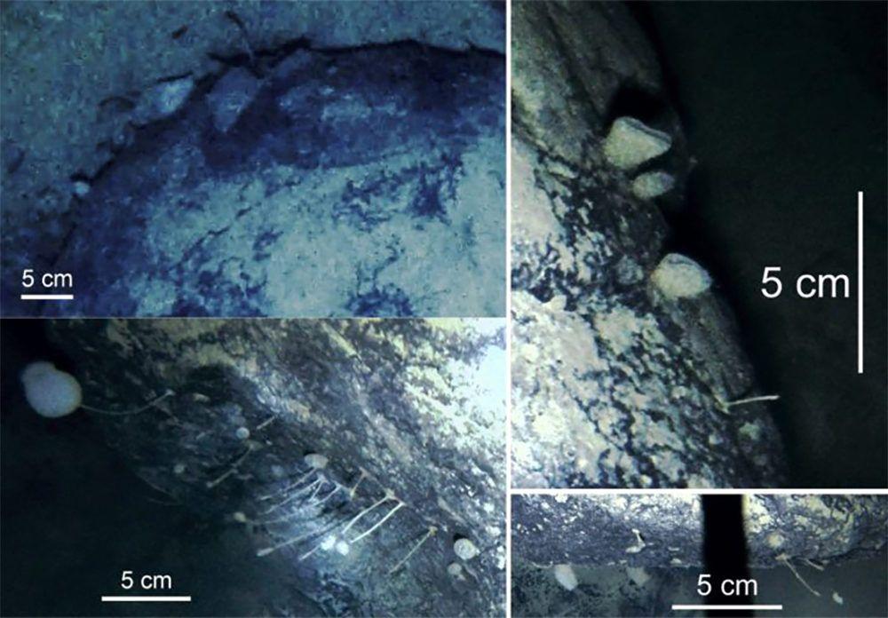Новите форми на живот под Антарктида