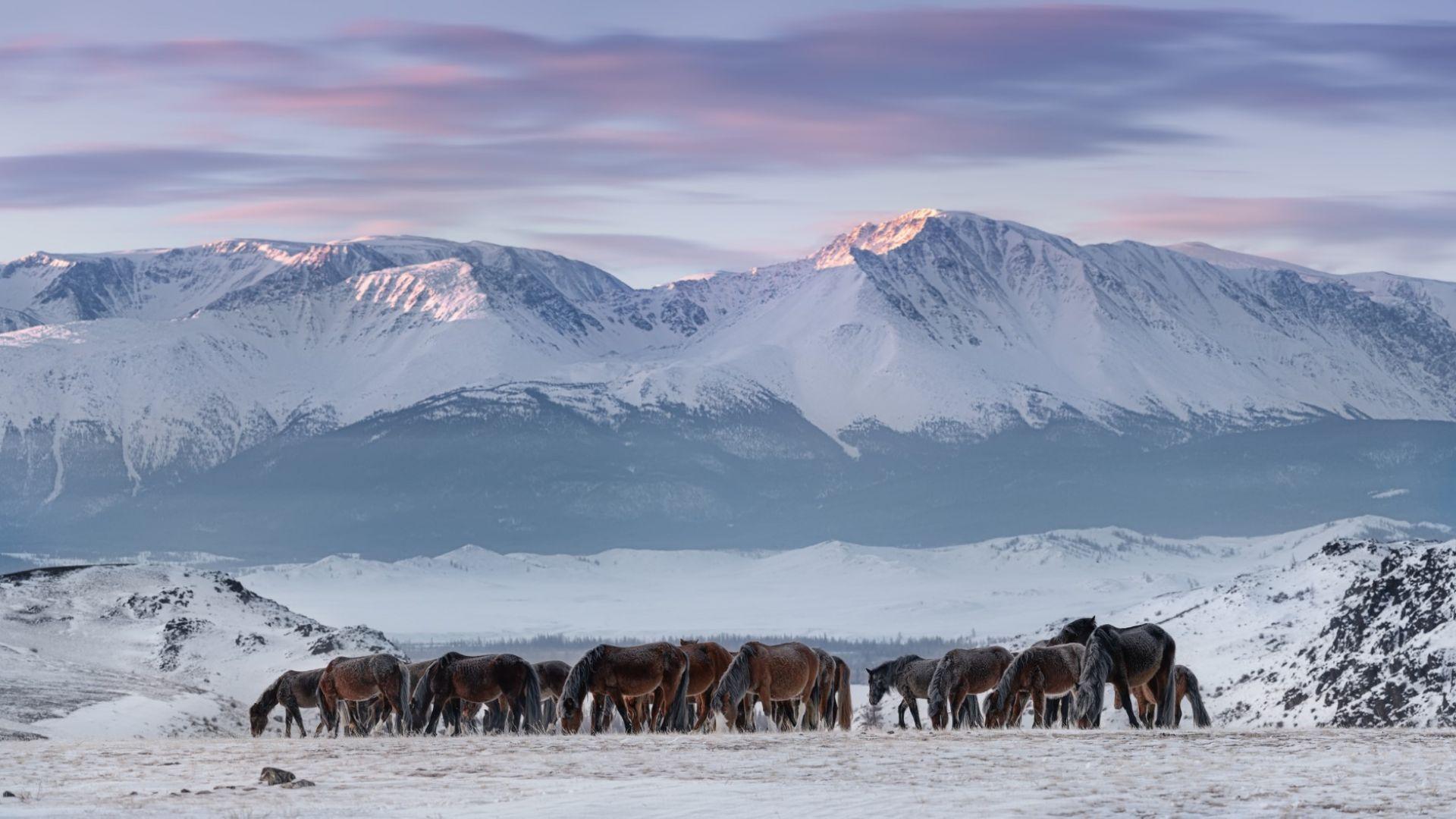 Откриха микропластмаса в снега и в най-отдалечените райони на Сибир