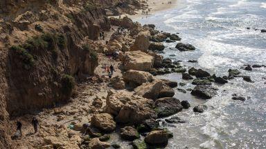 В Израел спасяват с майонеза морски костенурки от катран