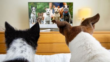 """Създадоха ултравиолетов """"телевизор"""" за животни"""