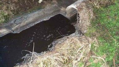 Екоексперти установиха умряла риба в река Камчия