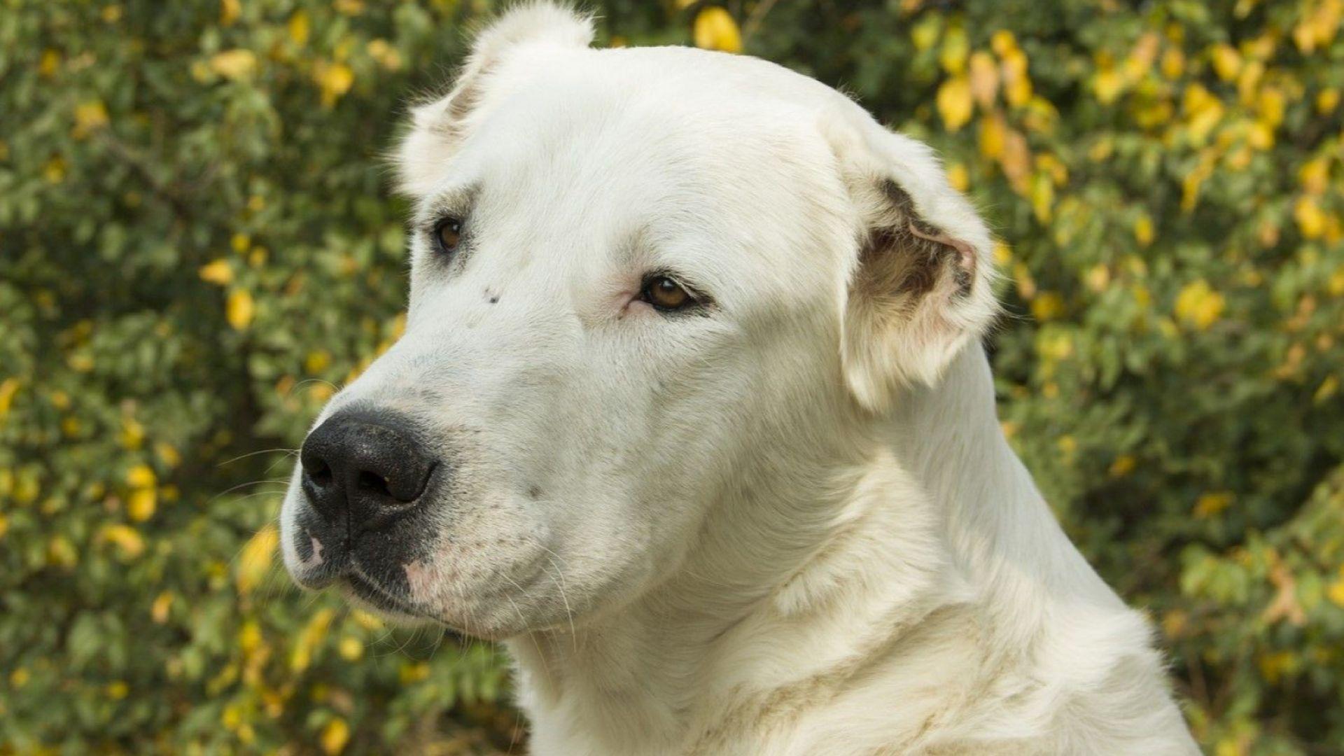 Над 400 стопани на домашни кучета са проверени в столицата