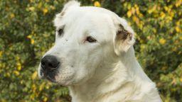 Куче нахапа жена в Стара Загора